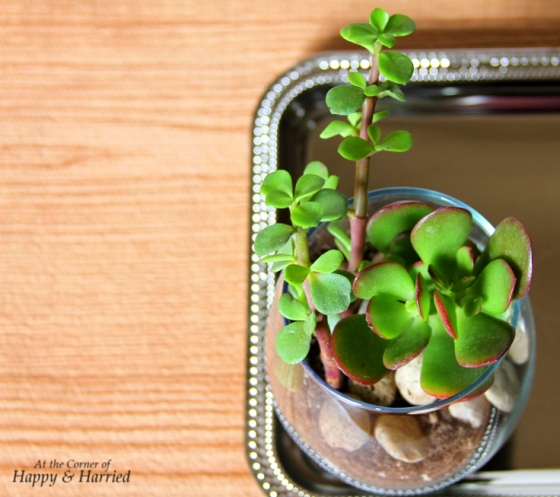 Spring DIY - Succulents In Glass Jar