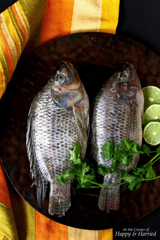 Whole Tilapia Fish